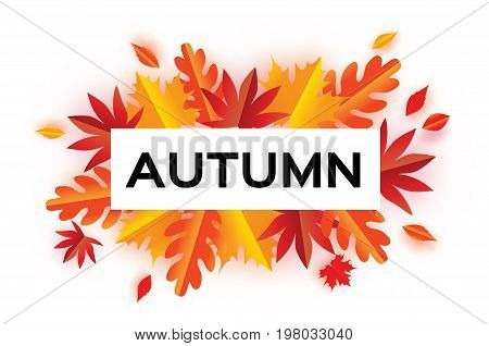 Autumn Paper Cut Leaves. Hello Autumn. September flyer template. Rectangle frame. Space for text. Origami Foliage. Maple, oak. Fall poster. White background. Vector illustration