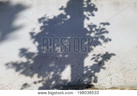 abstract background of shadows papaya tree on a concrete wall.