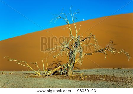 Fairy-tale world. Sunset, Namibia, South Africa. Giant yellow dune and small lonely tree in the Namib Desert. The concept of extreme and exotic tourism