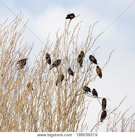 A Starlings on the tree . A photo