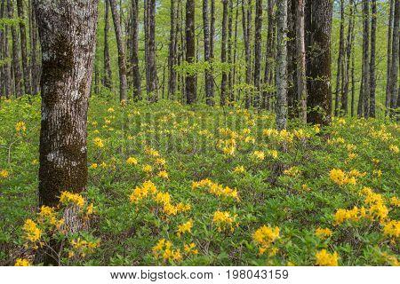 Spring forest landscape. Oak grove. Selective focus.