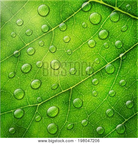 Vector Water Drops On Green Leaf Macro Background.