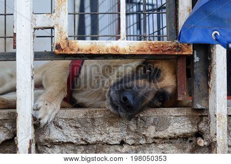 Marmaris old town view, slipping dog