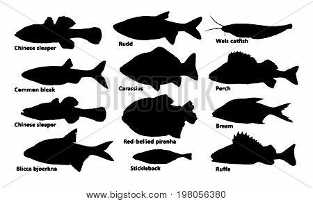 Silhouettes of many fish , set vector