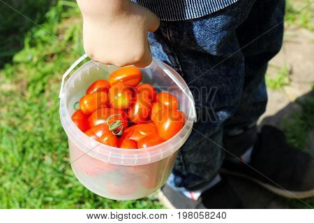 Bucket With Vegetables On The Grass