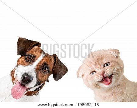 Cat dog terrier jack russell terrier domestic animal brown and white fun