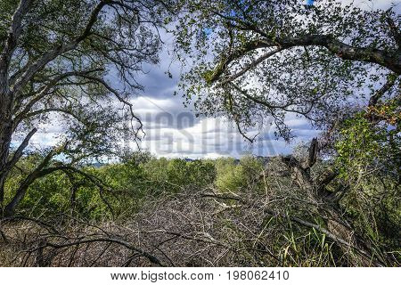 A view out over Topanga Canyon through the frame of the branches of oak trees