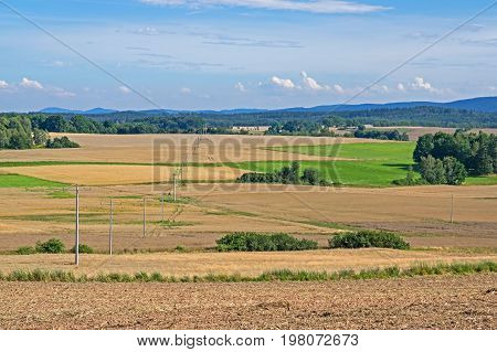 The plains of which the crop fields are located. It is a cereal crop. Cereals are ripe, whole grain, straw is yellow. It is sunny day. Cloudy sky. Among the fields you can see clumps of green deciduous trees.