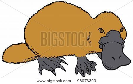 Cute vector platypus - Ornithorhynchus anatinus or Duckbill. You can design cards, part of platypus logo, mascot, corporate character and so on. Lively animal character.