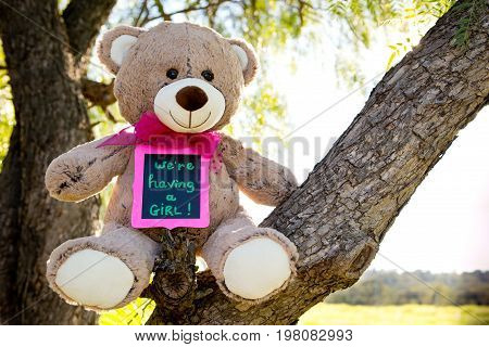 We Are Having A Girl - Announcement Message For Expecting A New Baby Girl - Teddy Bear Sitting In Fo