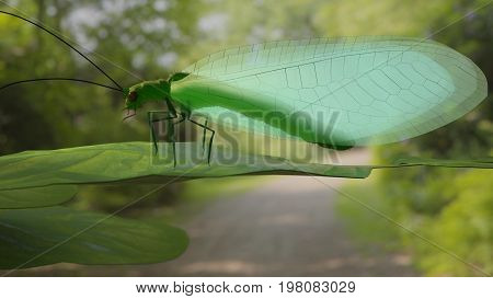 Chrysopidae flying insect green lacewing 3d render