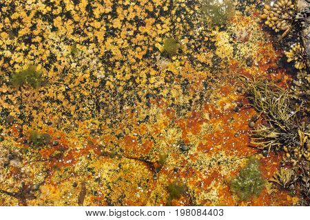 Colorful Bacteria - Orange With Kelp