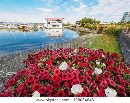 Red and white flowers decorate the seaside walk in Sidney Vancouver Island British Columbia to celebrate Canada 150 anniversary