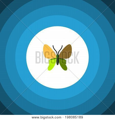 Beauty Fly Vector Element Can Be Used For Moth, Butterfly, Monarch Design Concept.  Isolated Moth Flat Icon.