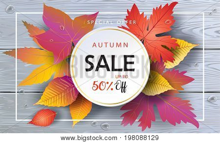 Autumn Sales banner, Sale Vector illustration. Fall sales season voucher with realistic drawing maple leaves, leaf fall, wood texture, water drops. Thanksgiving Holiday decoration. Maple tree leaves, lettering, wooden texture. Autumn Sale grey wood backgr