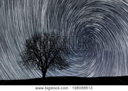 Star trails. Lonely tree. Star trails. Lonely tree.
