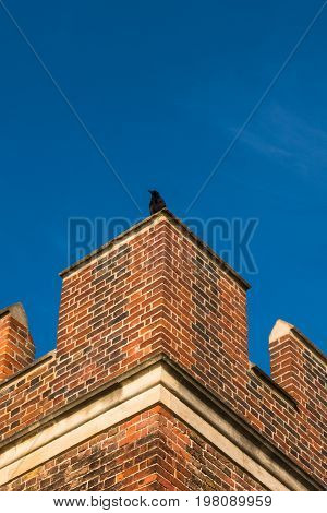 Bird Sitting On Top Parapet Of Tudor Building Brick Wall