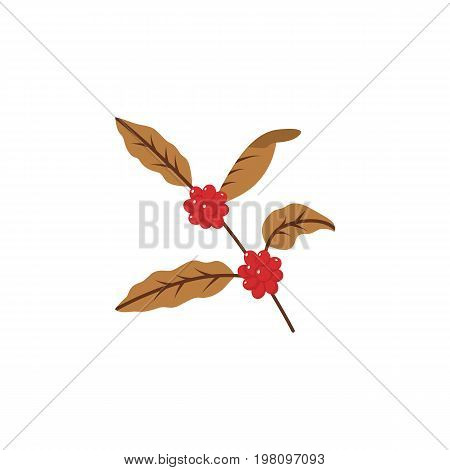 Coffee tree branch with beans. Coffee plant with leaf, berry, coffee bean. Flat icon.