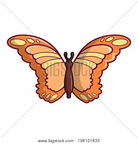 Monarch butterfly icon. Cartoon illustration of monarch butterfly vector icon for web design