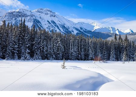 Snow covered meadow with mountains in the background in Peter Lockheed Provincial Park, in the Canadian Rockies, Alberta, Canada