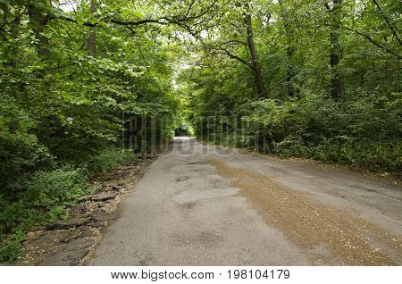 Road in a deciduous forest, Natural landscape