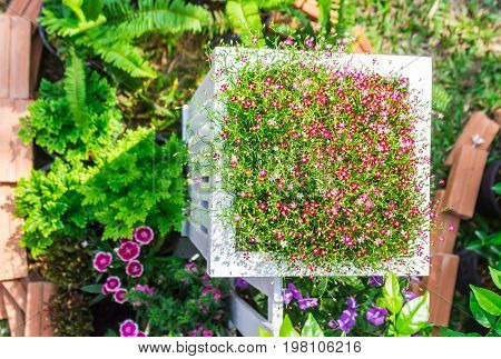 Top view white picket fence and flowers in garden on summer.