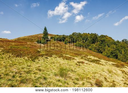 Spruce Tree On A Grassy Meadow Of The Hill