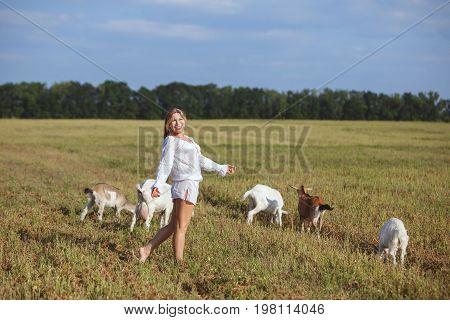 Goats graze in a meadow woman walking beside him.