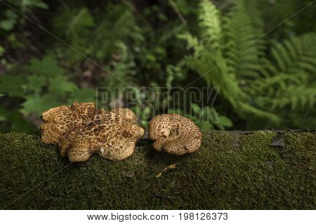 Forest mushrooms moss fern tree trunk dark green