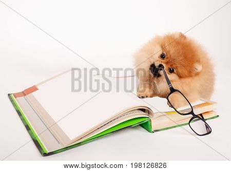 Charming puppy chews on glasses lying on the book