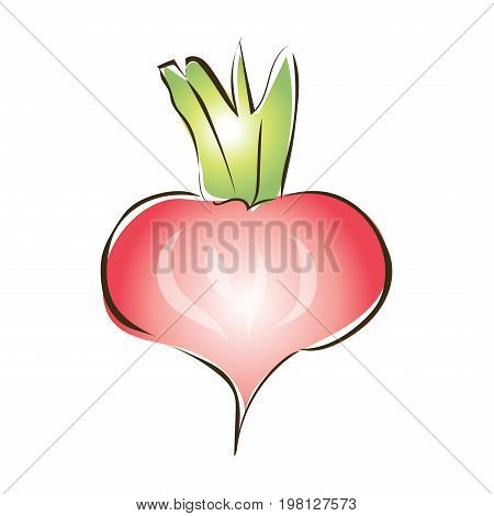 Red radish, turnip or other root vegetables. Vector sketch illustration, isolated on white background.