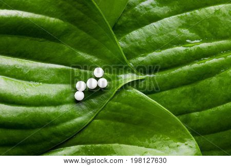 Homeopathy - A homeopathy concept with homeopathic medicine background