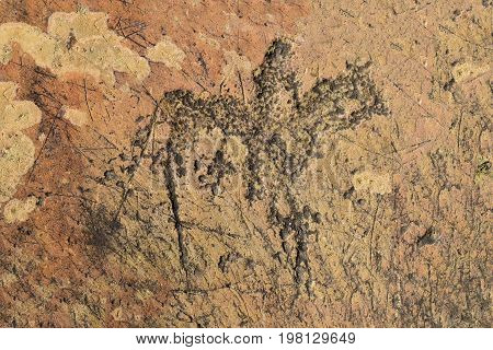 Prehistoric petroglyph of ancient turks in Altai mountains. Image of horse and rider on rock. Chuy-Oozy Altay Republic Russia.