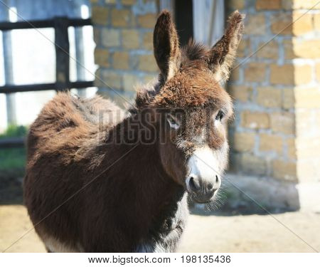 Enclosure with cute donkey on farm