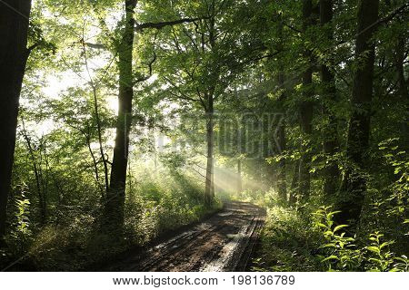 Rural road through a misty deciduous forest .