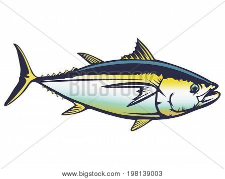 Tuna Fish Detailed Colored
