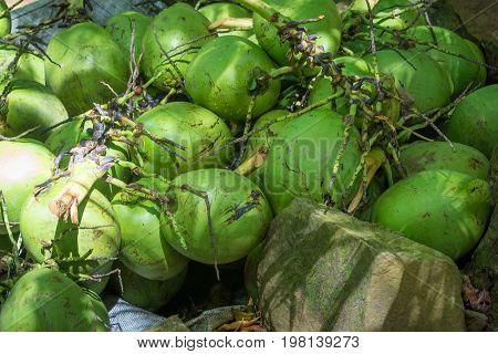 Shot Of Coconut Fruit On The Floor