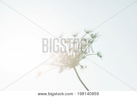 plant nature stem flower light bright summer sky seed sun floral wind abstract life growth