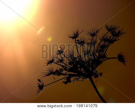 silhouette of a plant in the sun