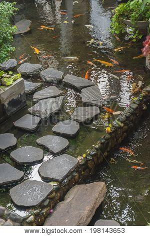 Japanese Koi Carp in pond of Japanese garden