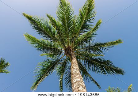 Abstract Shot Of  Natural Coconut Palm Trees