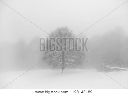 gloomy scary winter scene with fog surrounding trees