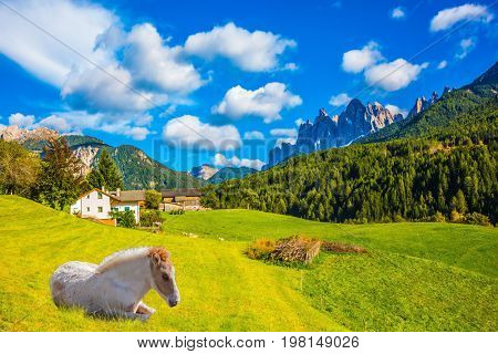 Sleek horse resting in the tall grass. Warm autumn day in the Val de Funes, Tirol, Dolomites. Concept of rural ecotourism