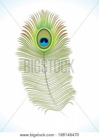 abstract artistic detailed peacock feather vector illustration