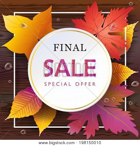 Autumn Final Sales banner, Sale Vector illustration. Fall sales season gift card with realistic drawing maple leaves, leaf fall on brown wood texture, water drops, top view wooden table background.