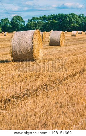 Hay bails harvesting in golden field landscape. Some green trees in background. Vertical shot.