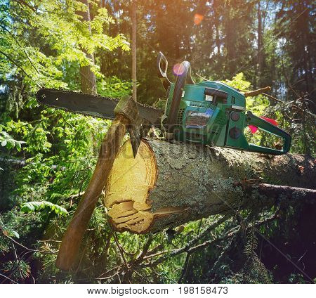Lumberjacks equipment chainsaw and ax at the broken tree
