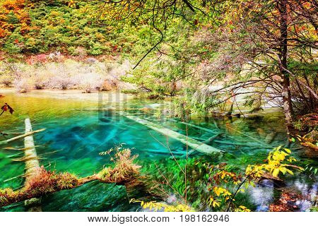 Azure Water Of Lake With Submerged Tree Trunks Among Fall Woods