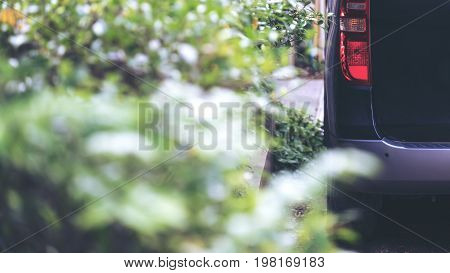Closeup image of a black car with red tail light parking on the street nearby a bush with blur green nature background