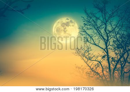 Night landscape of colorful sky foggy is swinging between silhouette of dry tree and full moon. Serenity nature background. Outdoor at nighttime. Cross process. The moon taken with my own camera.